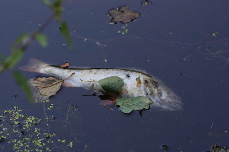 Consumo de pescado se tornaría insalubre por calentamiento global